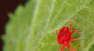 How to deal with spider mites