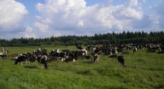 Как организовать сельскохозяйственное предприятие