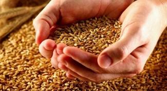 Сельское хозяйство как отрасль