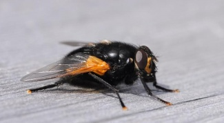 Как спастись от мух