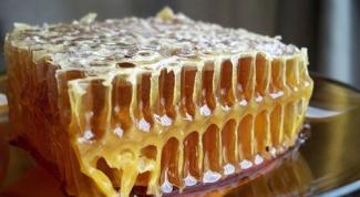 Почему пчелы строят соты