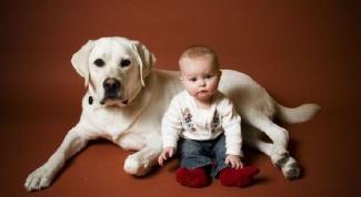 Какое животное завести для ребенка с ДЦП