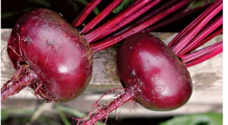 Why not growing beets
