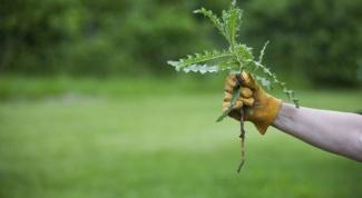 Решаем вопрос, как избавиться от сорняков на газоне