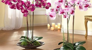 Why do Orchid roots to dry