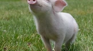 Что значит выражение «свиным рылом в калашный ряд»