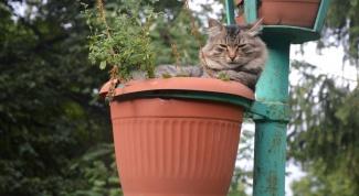 Стоит ли беспокоиться, если у кошки сухой нос