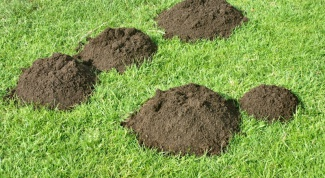 What plants repel moles