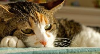 Как лечить рахит у кота