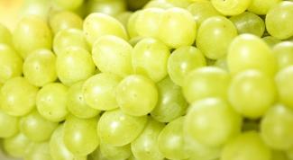 Весенняя обработка винограда от болезней