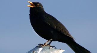 Головной мозг птиц: строение и функции