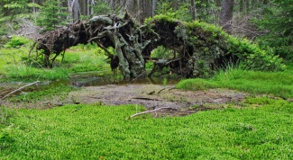 Sphagnum moss: description, life cycle, application