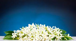 Масло нероли: полезные свойства, применение