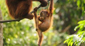 Таинственный мир животных: интересные сведения и факты