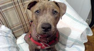 Многоразовые пеленки для собак: удобно, практично, гигиенично