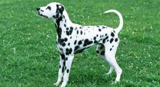 Для каких животных особенно важно обоняние