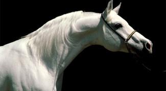 Как сделать фигуру лошади из папье-маше
