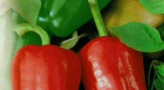 Как подготовить семена перцев для посева