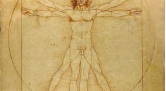 Теория йоги. В каком теле мы можем родиться