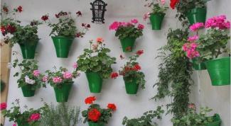 Какие комнатные цветы полезно держать в квартире