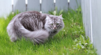 How to wean cats from your garden
