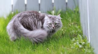 Как отучить кошек от вашего огорода