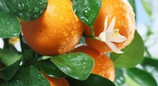 Как самостоятельно вырастить мандарин из косточки