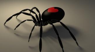 Почему нельзя убивать пауков в доме