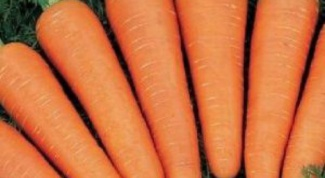 Как в домашних условиях хранить морковь
