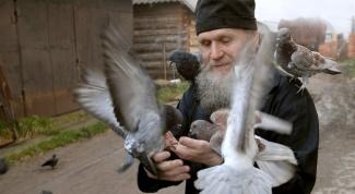 Можно ли молиться о животных: православный взгляд