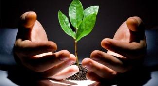 Болезни рассады овощных культур