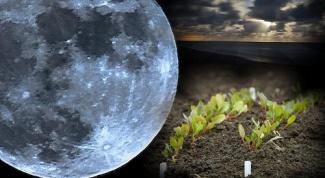Лунный посевной календарь на февраль 2015 г