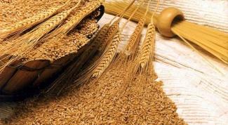 Применение зародышей пшеницы