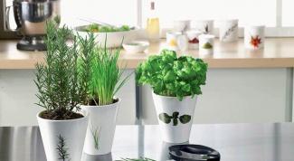 Ароматные травы на подоконнике