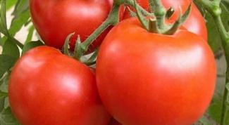 Подкормка для помидоров на основе дрожжей