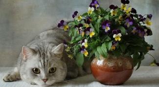 Какие растения опасны для кошек