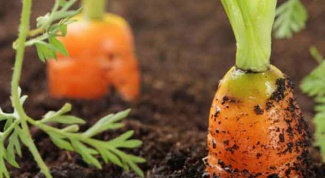 Как правильно прореживать растения