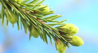 Какие лекарственные растения заготавливают в марте