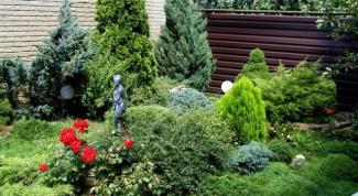 Подбираем хвойные растения для ландшафтного оформления дачного участка
