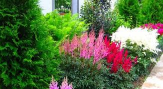 Варианты композиций из хвойных растений