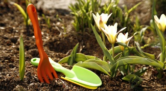 What flowers and when to sow in April