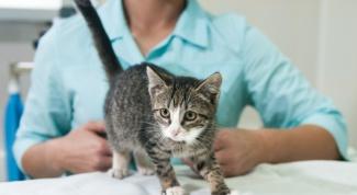 Стоит ли ставить прививку домашней кошке