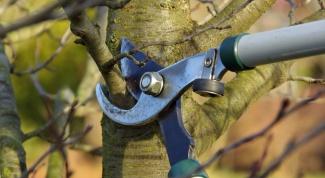 Как правильно проводить обрезку деревьев в саду