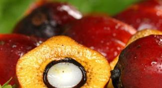 Как можно использовать пальмовое косточковое масло в домашних условиях