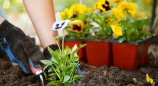 What flowers and when to sow in may