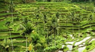 Как отдохнуть в Индонезии: остров Бали