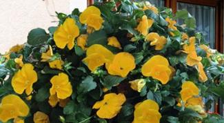 Подвесные корзины для цветов: создаем цветочный шар