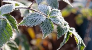 Как защитить посевы от возвратных заморозков