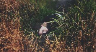 К чему снится живой человек мертвым