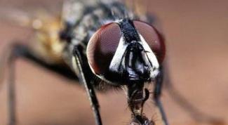 Как отпугнуть мух с помощью самодельных репеллентов